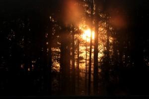 aurinkosumu